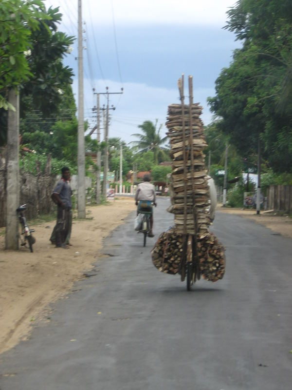 Wood transport in Eravur/Batticaloa - Sri Lanka