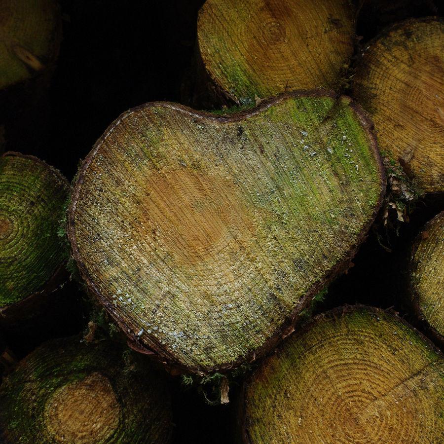Wooden Heart / Hölzernes Herz