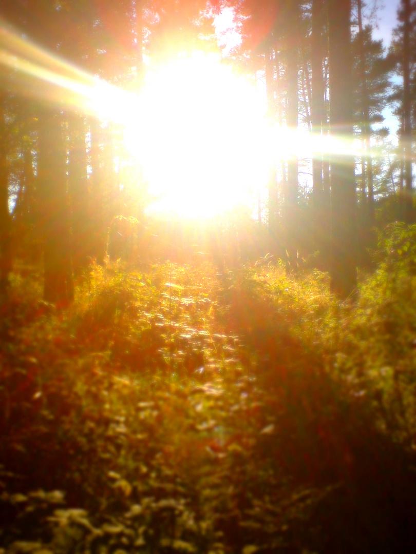 woodland brb