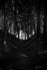 wood.mystic