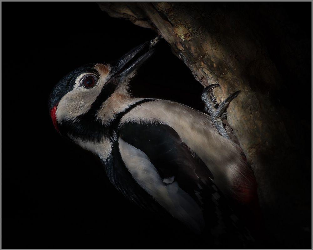 Woodpecker ....