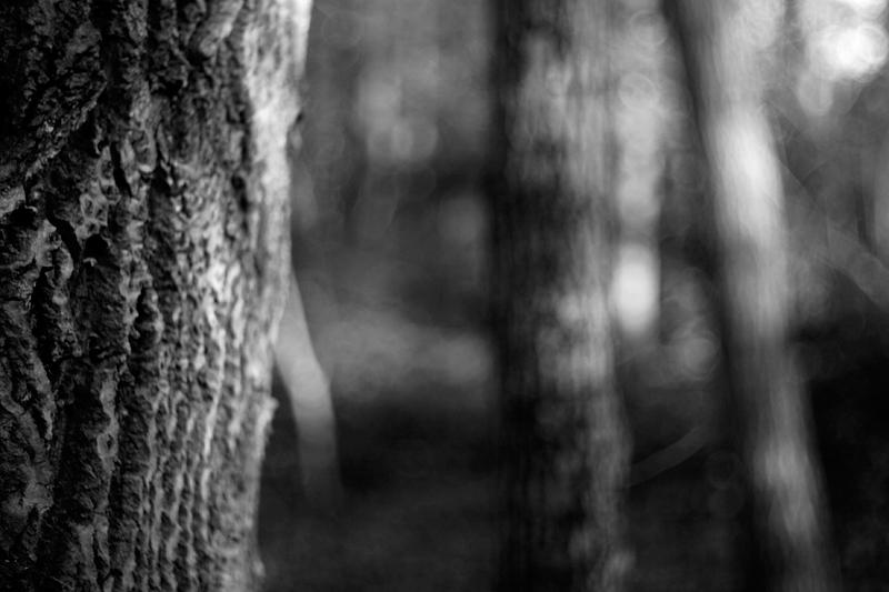 woods #18