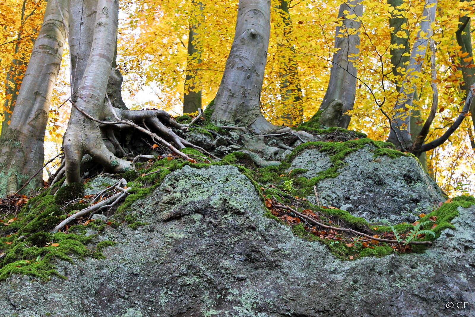 Woods On The Rocks