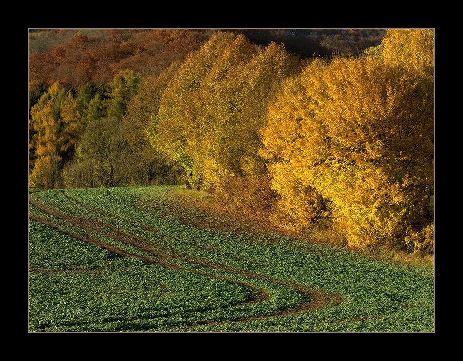 """...worauf der Bauer vom Lande nicht achtet... - (1. von """"Herbst-Licht und -Schatten"""")"""