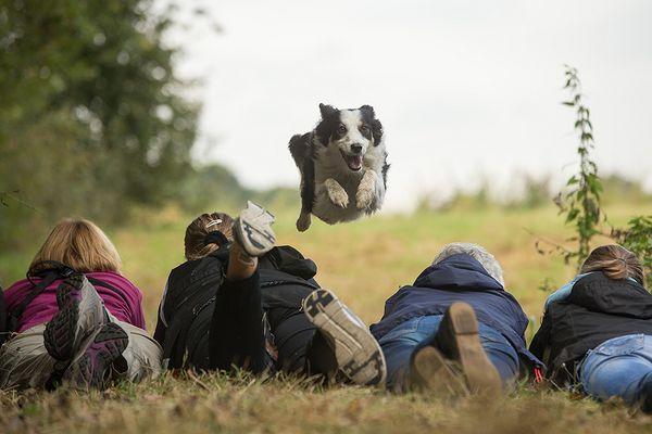 Workshophunde, respektloses Pack! :-D