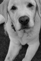 Worlds best dog (Sgully)