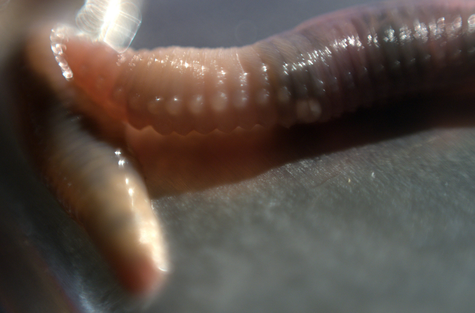 Worms Cuddling, 2010