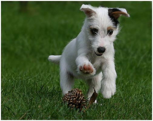 Wozu Hundespielzeug kaufen???