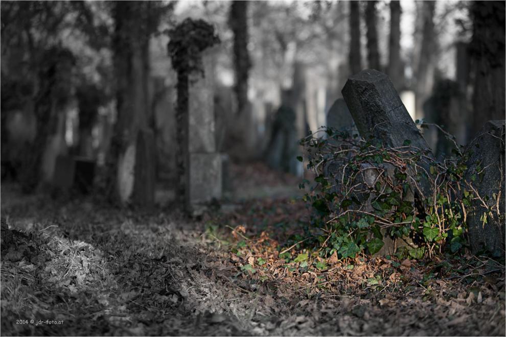Wr. Zentralfriedhof - jüdischer Teil