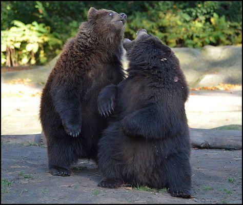 Wrestling a la Bärenbrüder