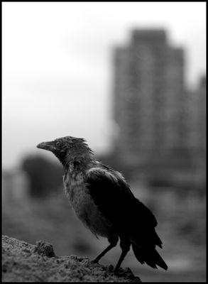 wroclaw citybird