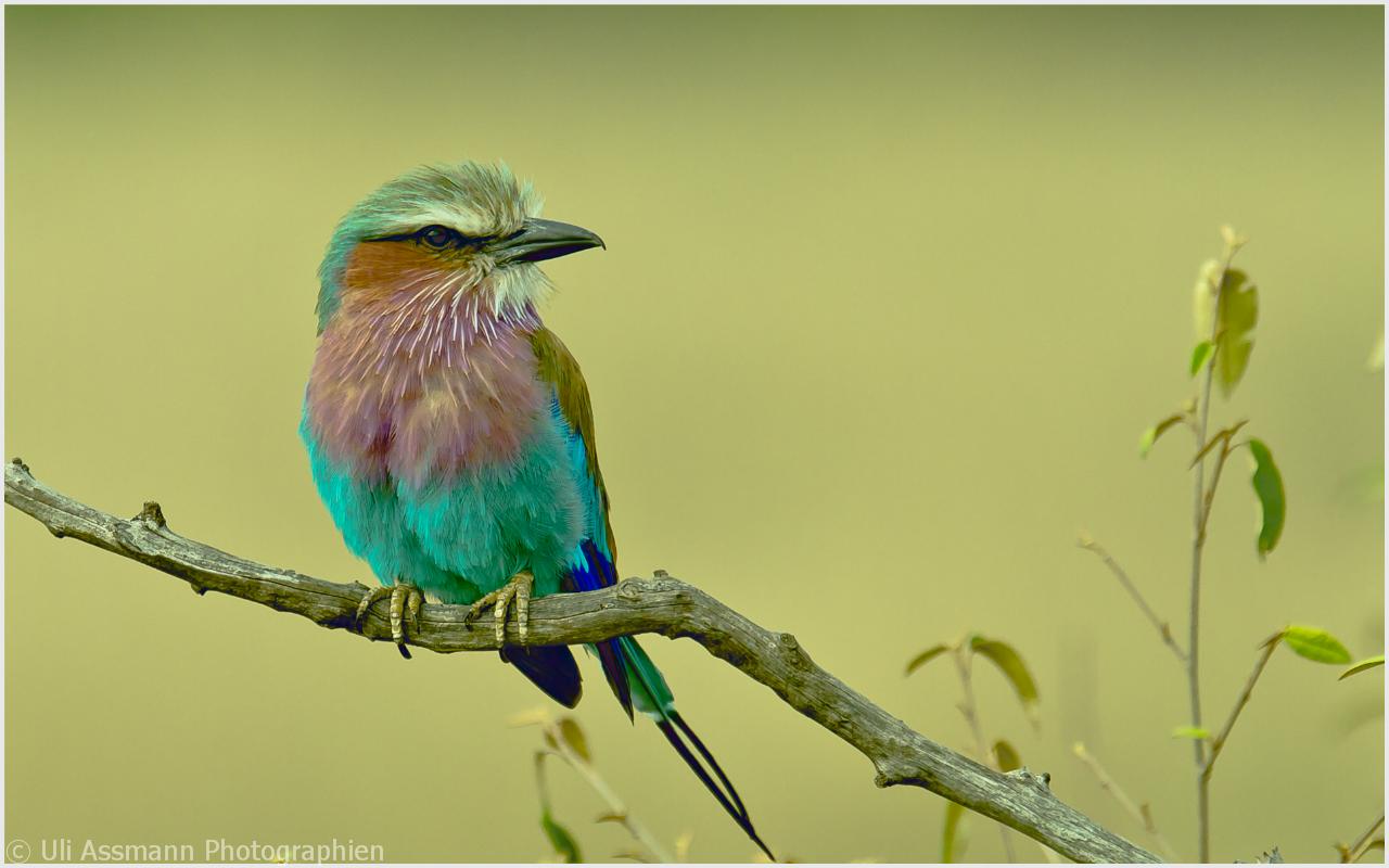 Wünsche allen Natur-und Wildlife-Fotobegeisterten ein tolles Jahr 2011.....