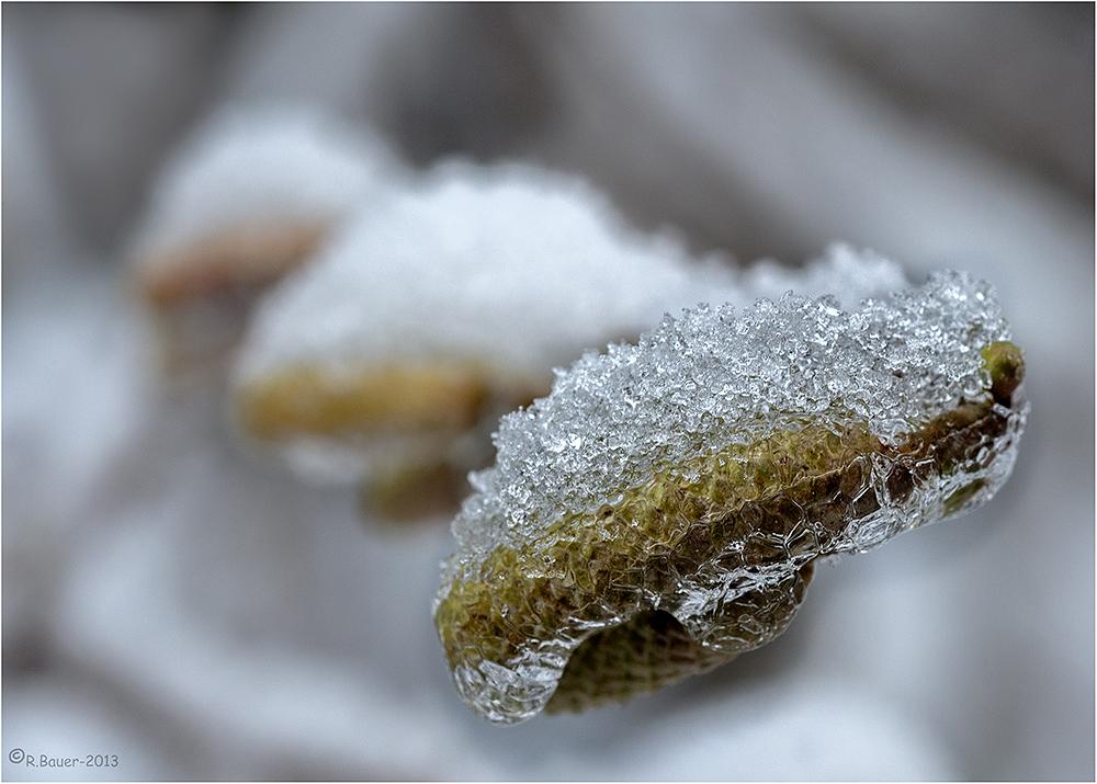 Würschdle im Eismantel
