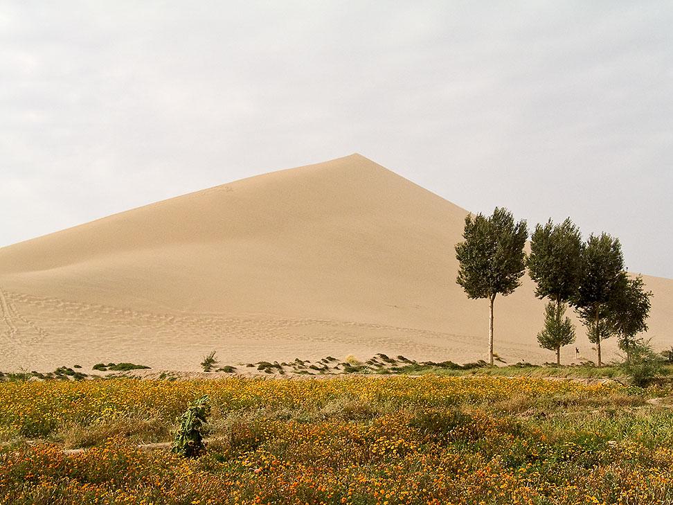 Wüste 5