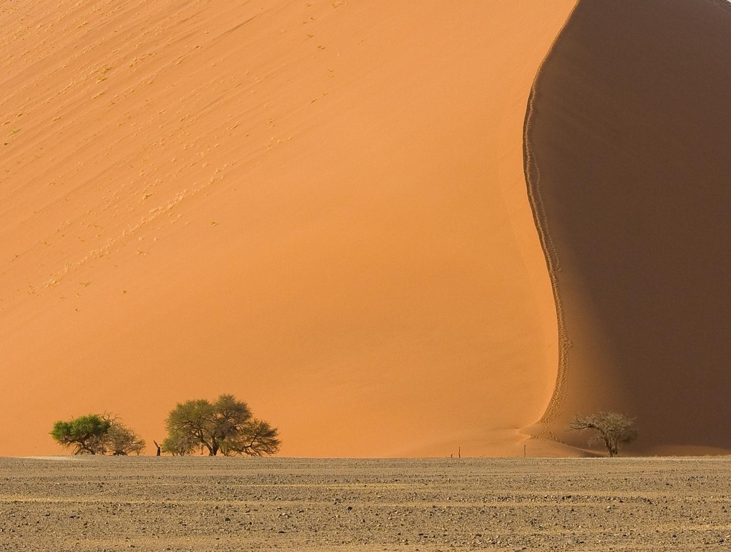 Wüste Namib 1