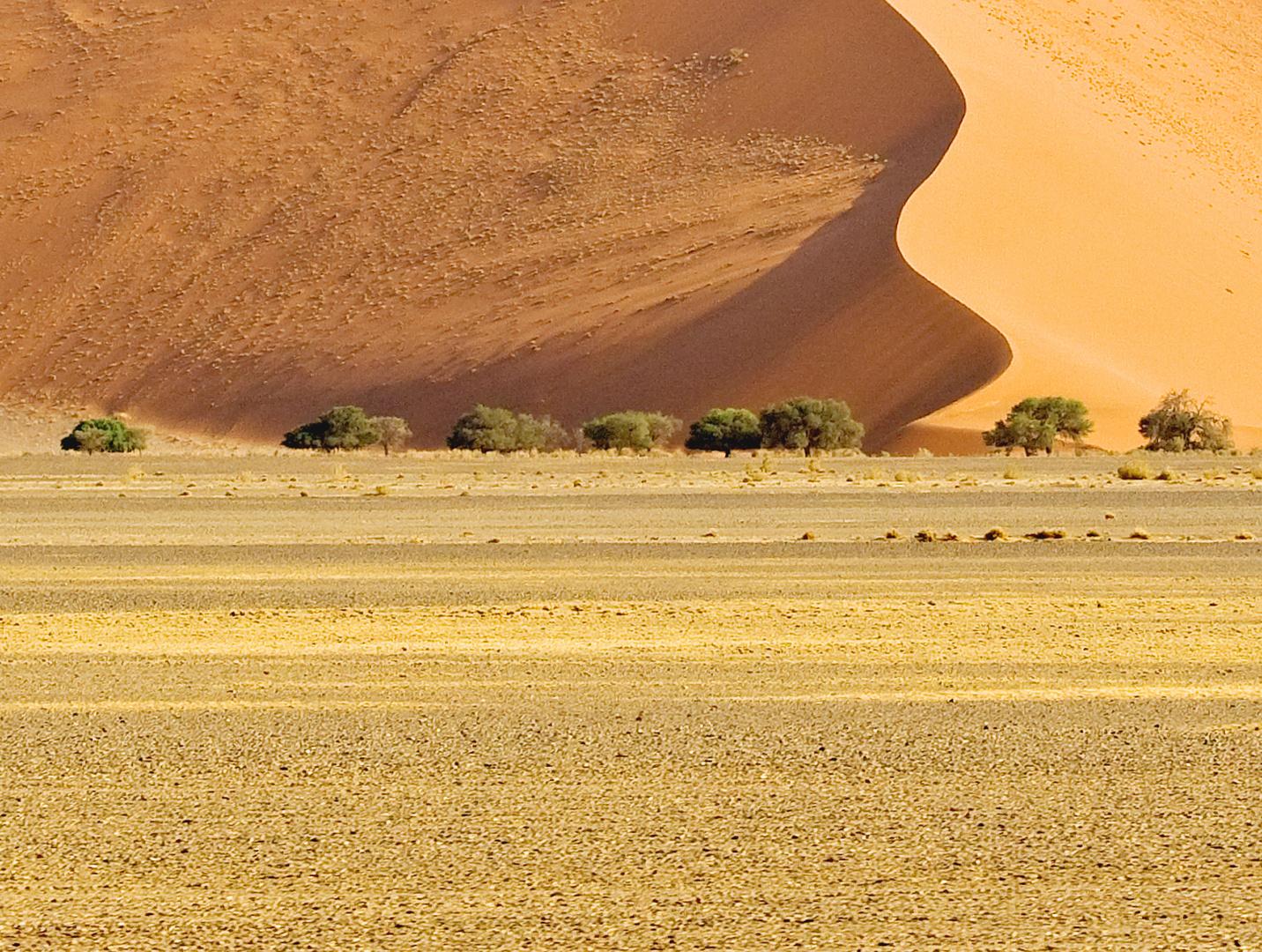 Wüste Namib 4
