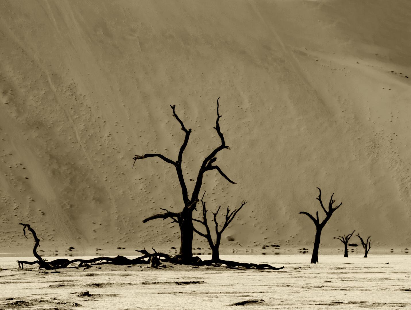 Wüste Namib - Dead Vlei