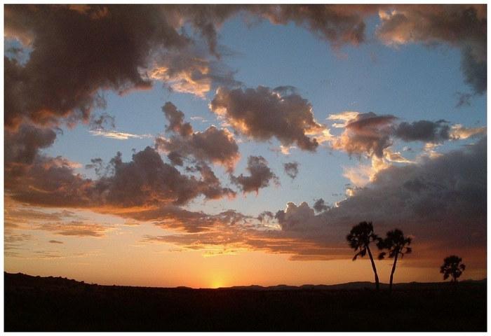 Wüste, Sturm und Palmen ...
