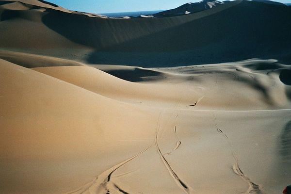 Wüstenfloh kann ihn jemand entdecken?!