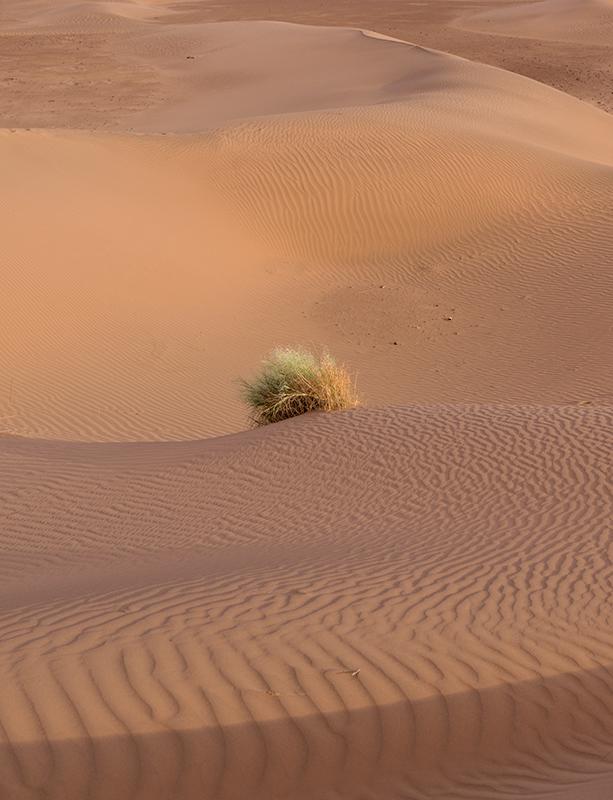 Wüstenimpessionen