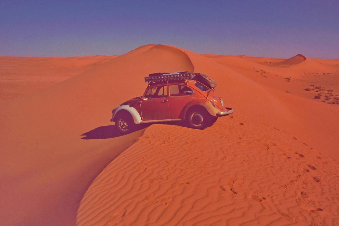 Wüstenkäfer auf dem Dünenkamm