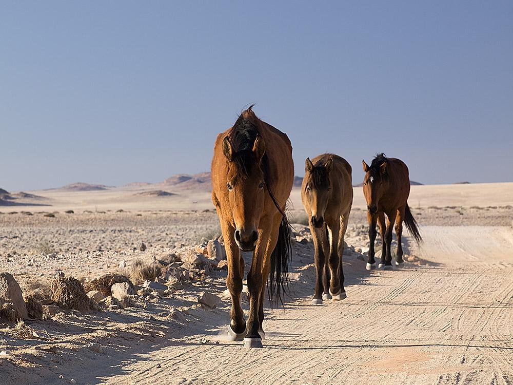 Wüstenpferde II