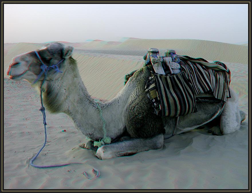 Wüstenschiff - 3D