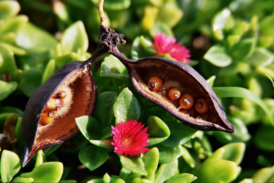 Wunder der Samen