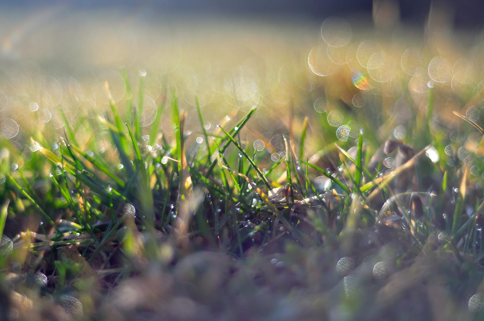 Wunder des Frühlings