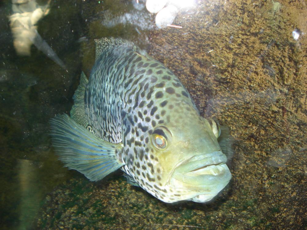 Wunderbare Fischwelt Münchner Zoo