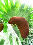 wunderbare Pflanze