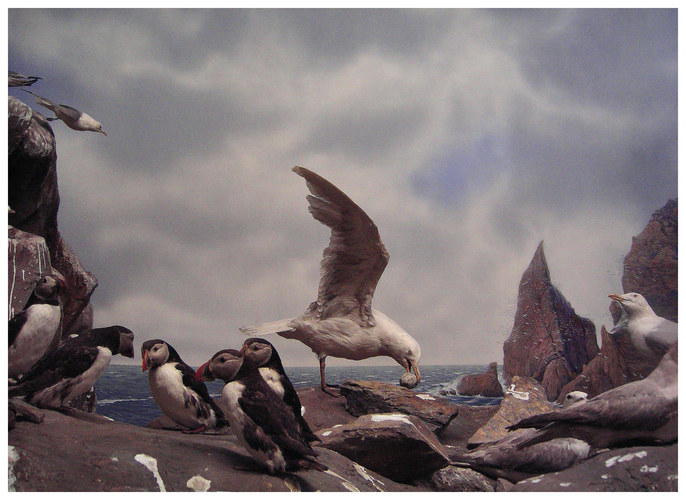 Wunderbare Welt der Tiere -4-