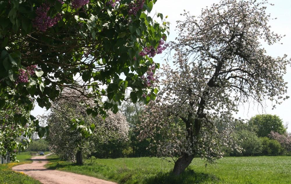Wunderbarer Frühling