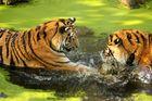 Wunderbarer Tag im Zoo