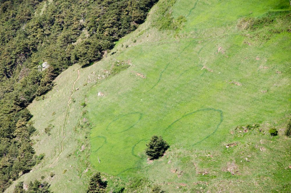 Wundersame Kreise im Gras