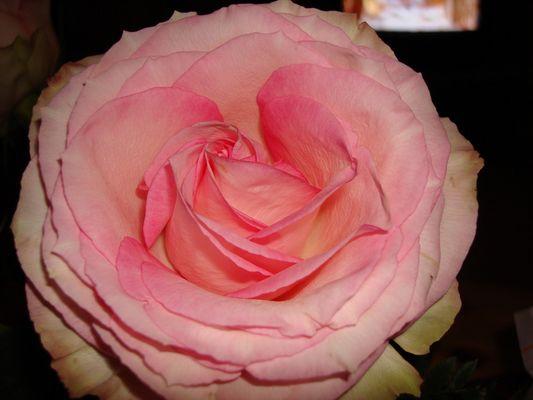 wunderschön in rosa