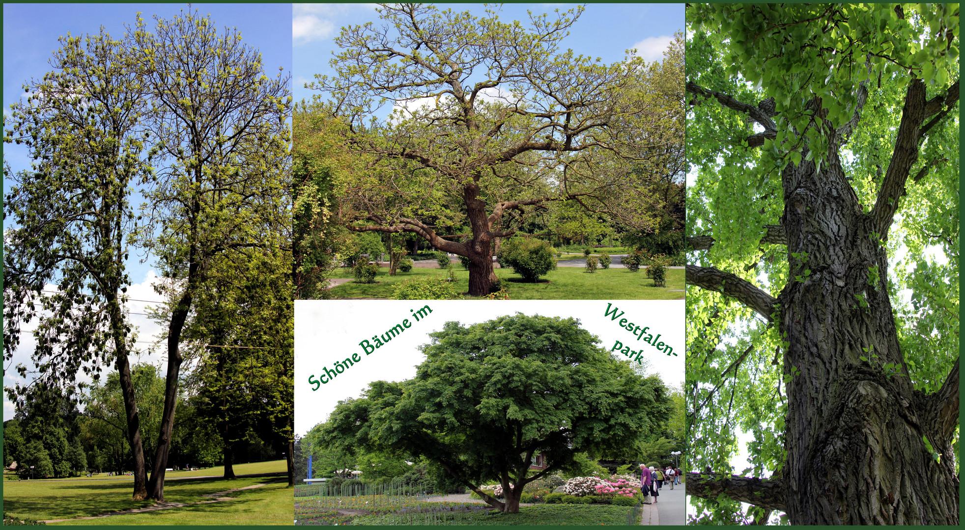 Wunderschöne Bäume...