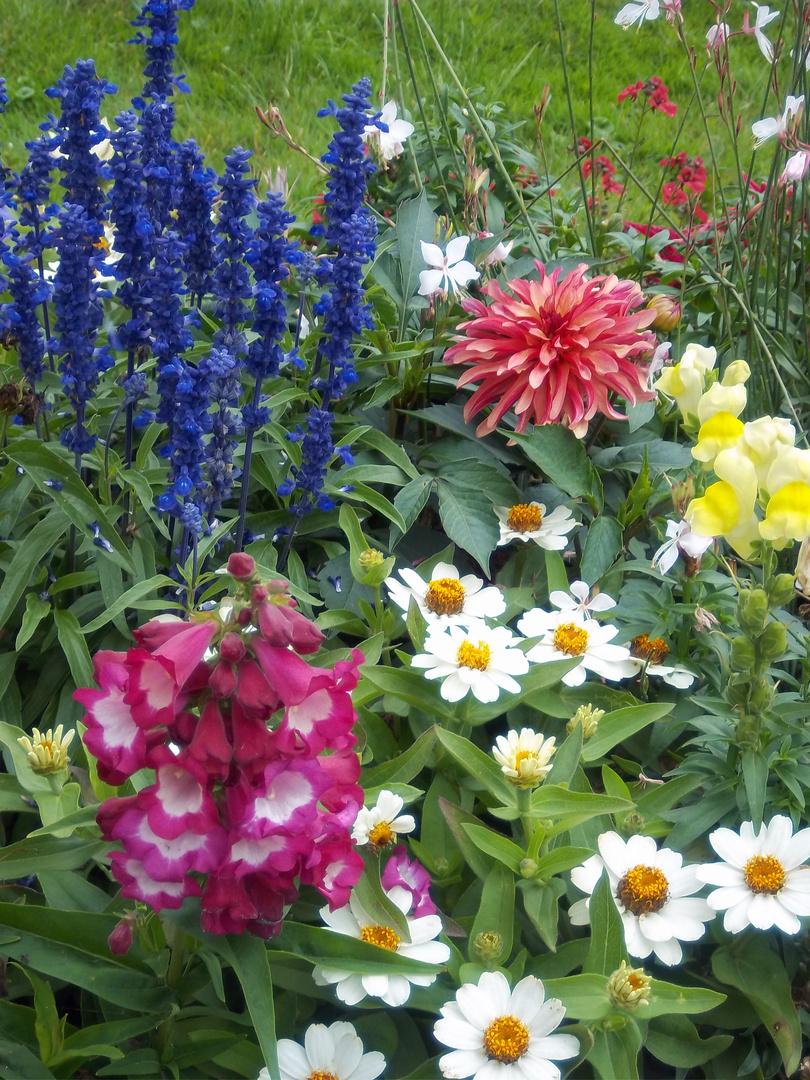 wunderschöne bunte Blumen