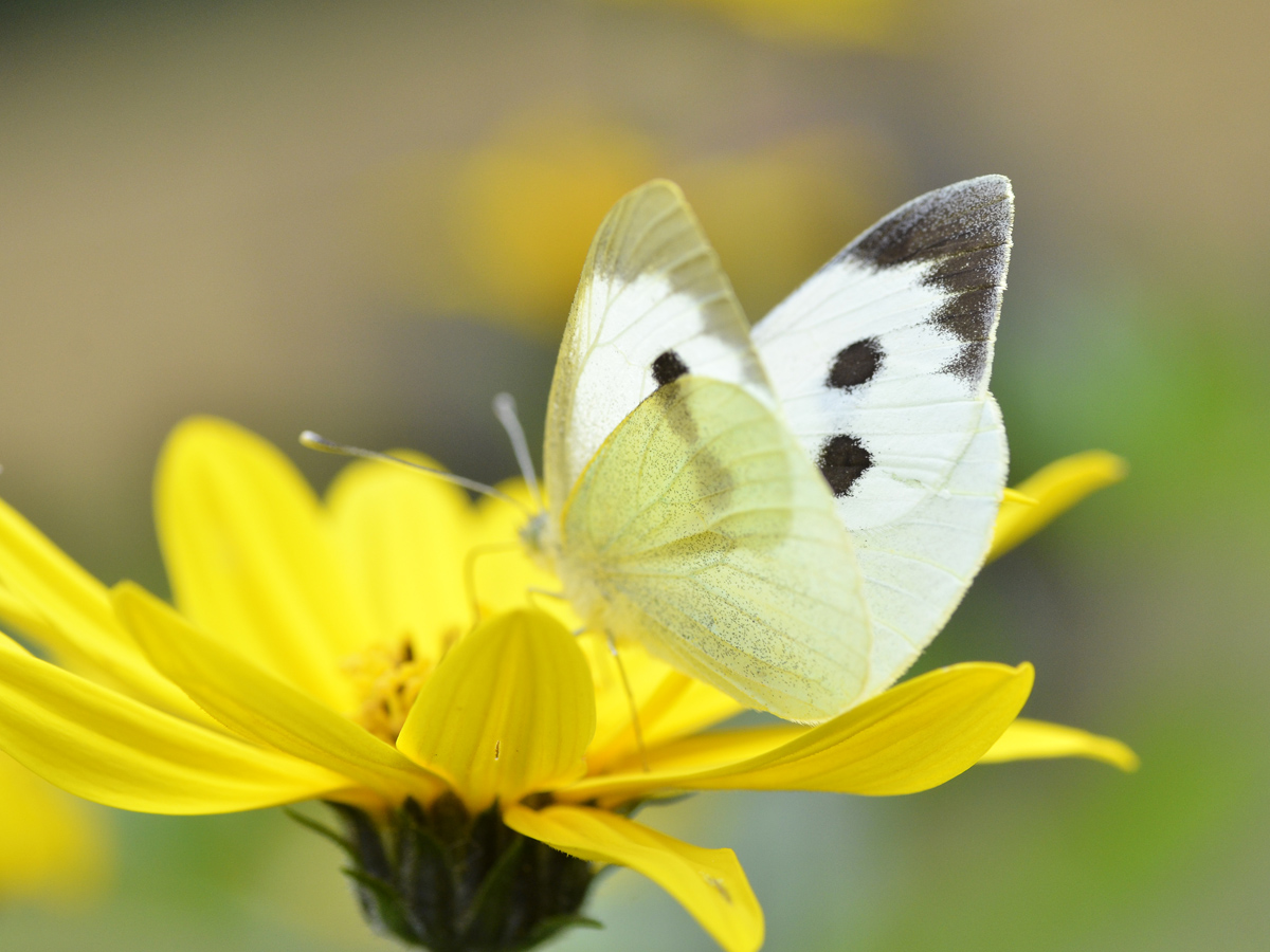 Wunderschöne Flügel