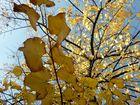 wunderschöne Herbsttage