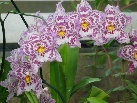 Wunderschöne Orchideenart