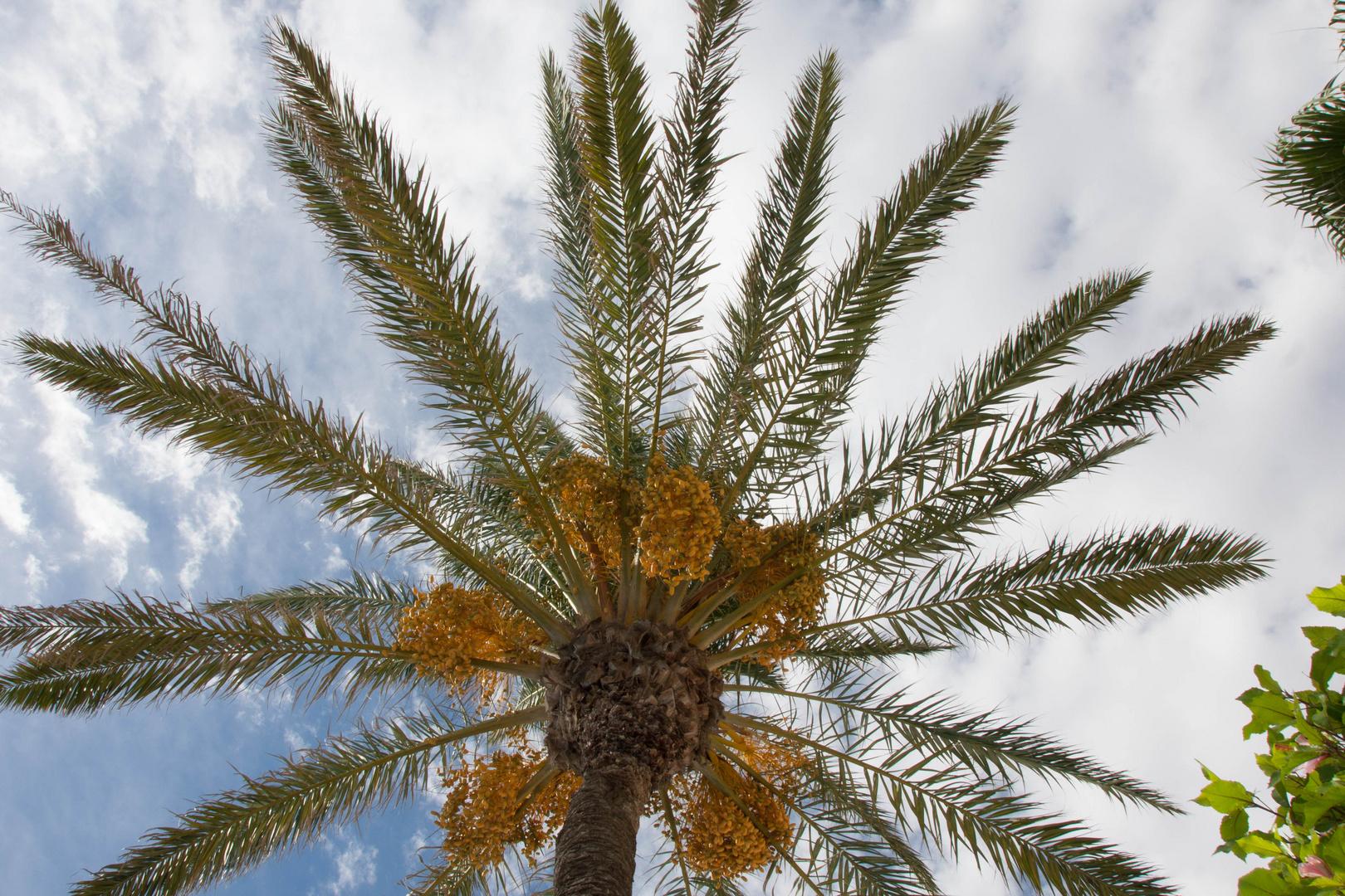 Wunderschöne Palme