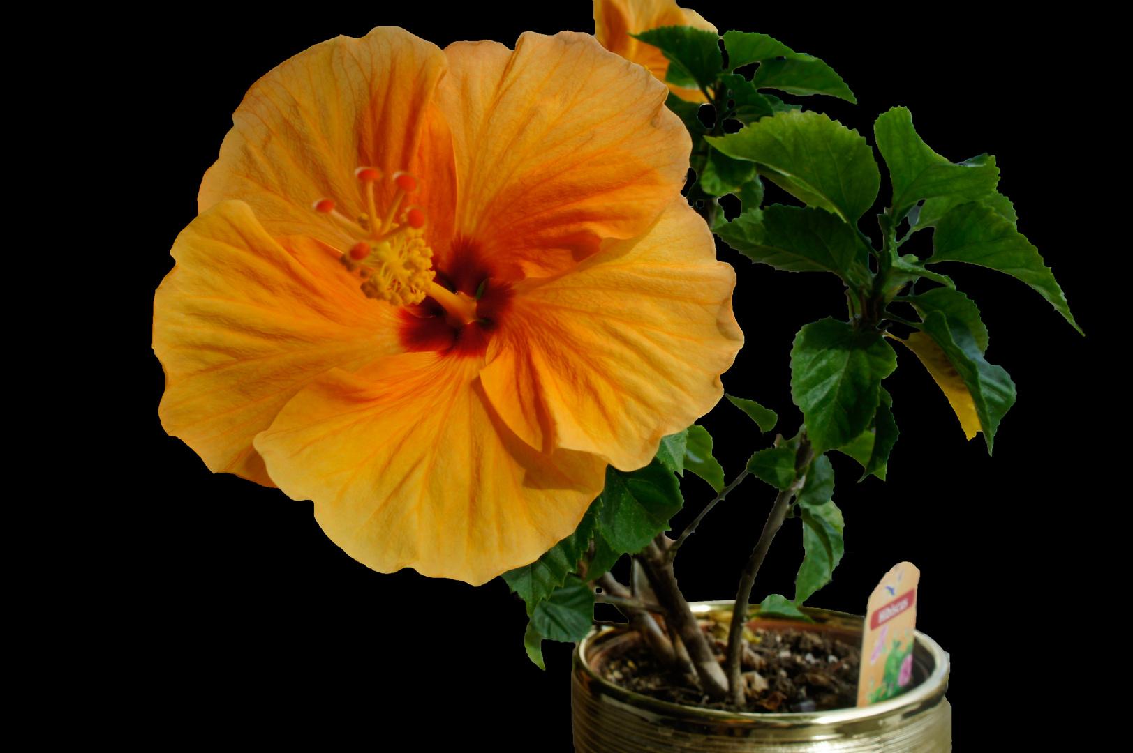 Wunderschöne Pflanze *-*