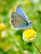 wunderschöner mini Schmetterling