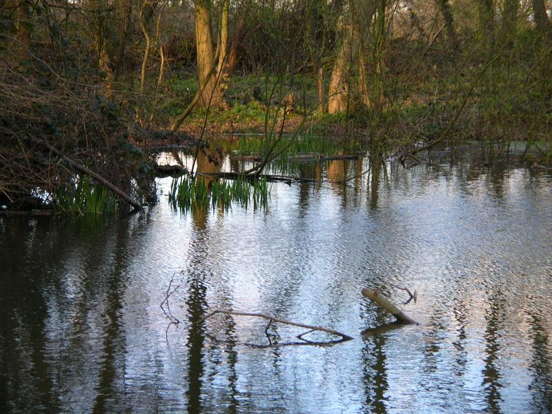 Wunderschöner Teich im Wald von England, 2nd
