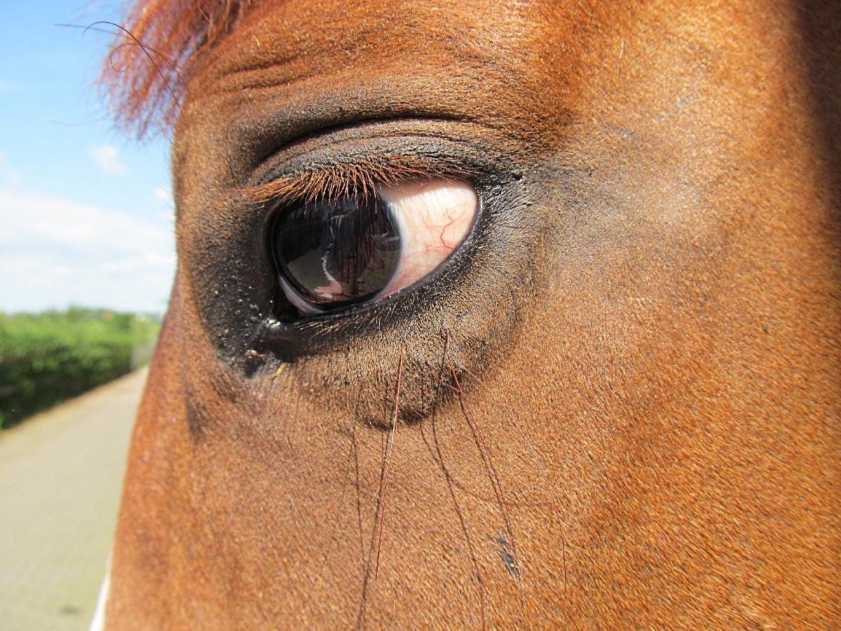 wunderschönes Auge !