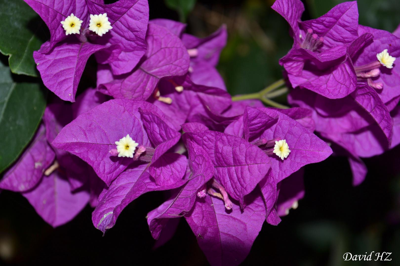 wunderschönes lila