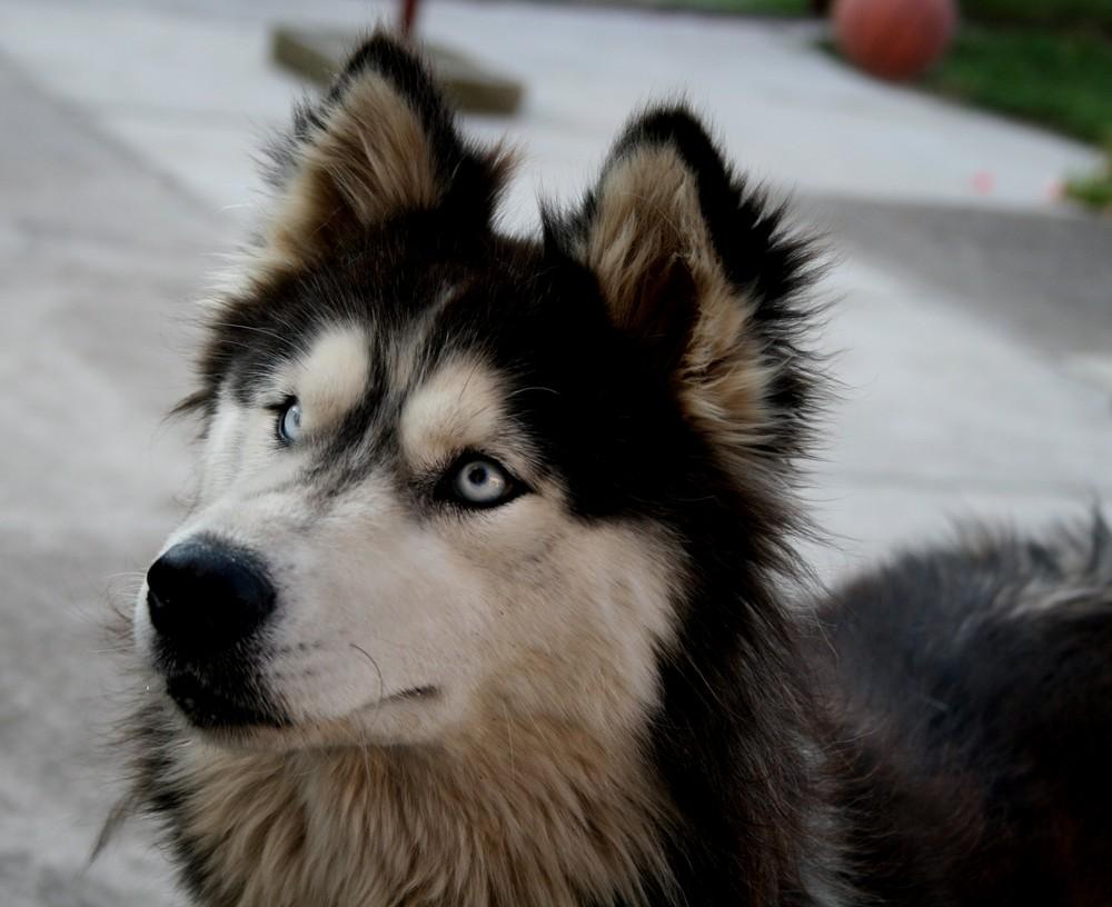 wunderschönes Tier