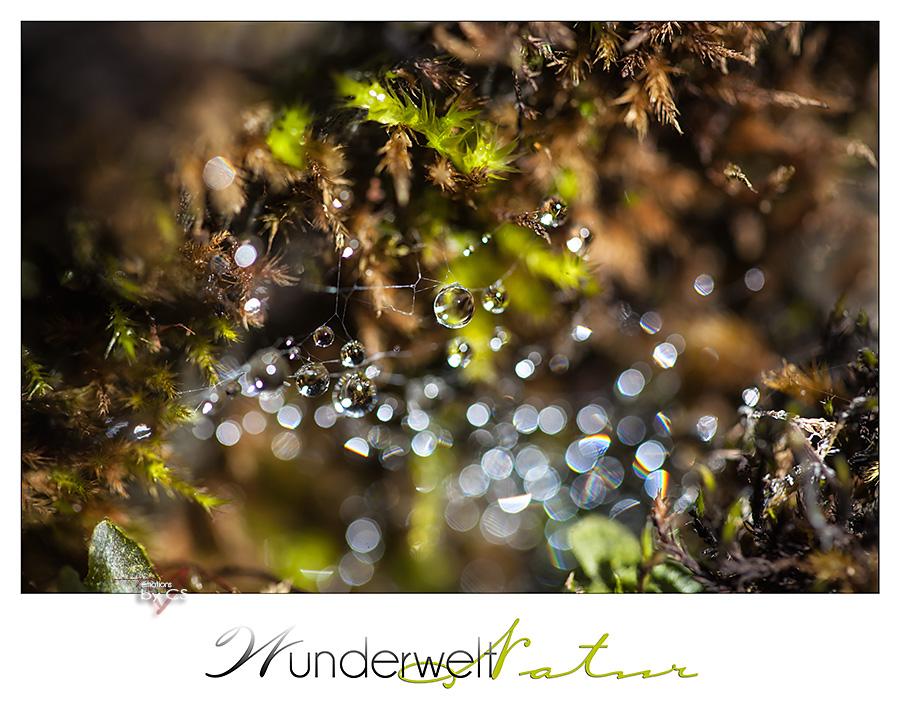 *** Wunderwelt ... ***