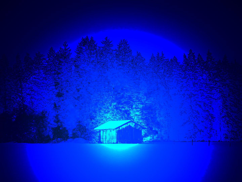 Wunderwelt im Winterwald